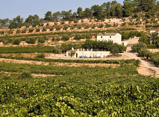 Viticultors del Priorat, SL